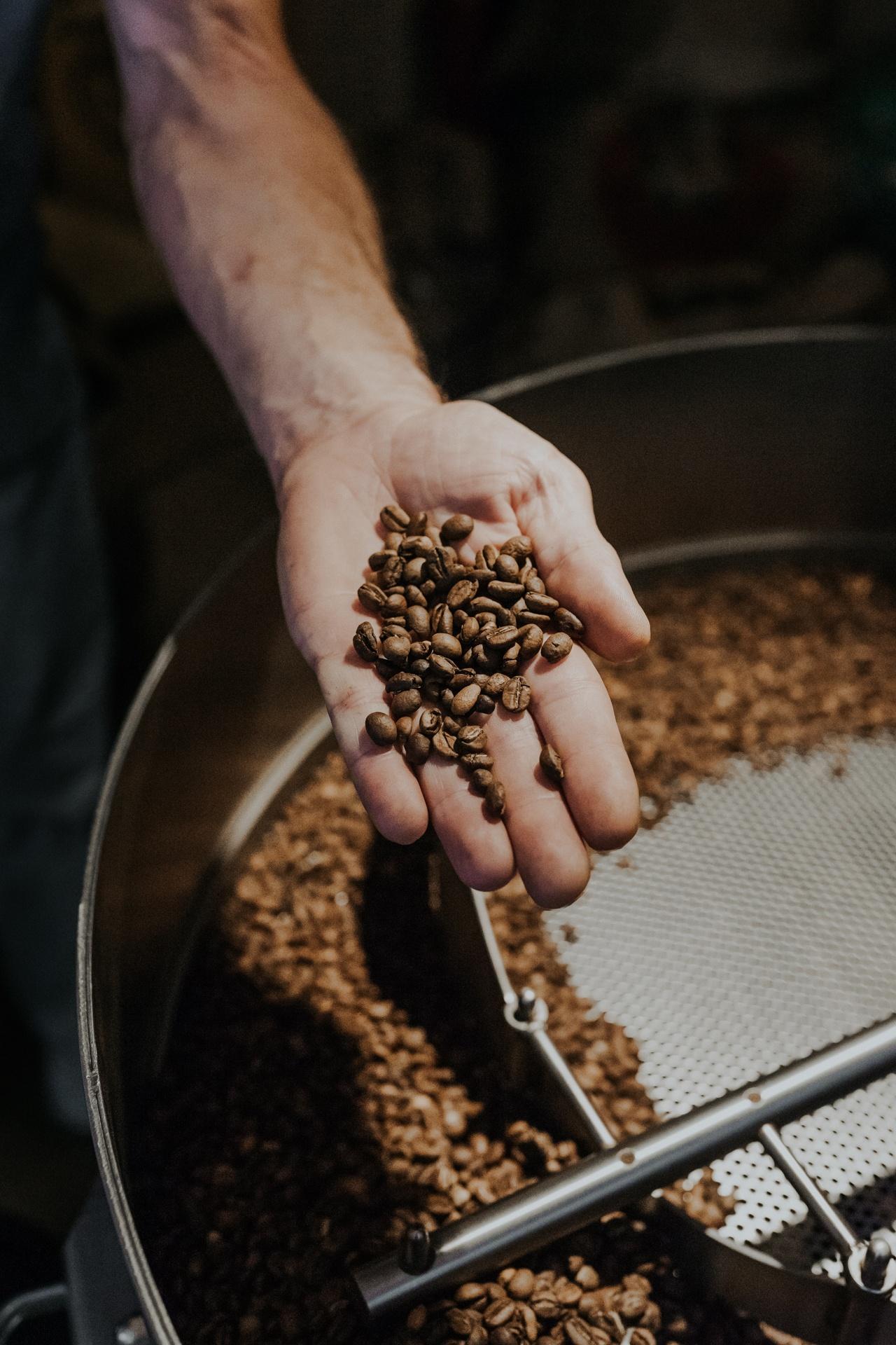 Ein handvoll frisch gerösteter Kaffee