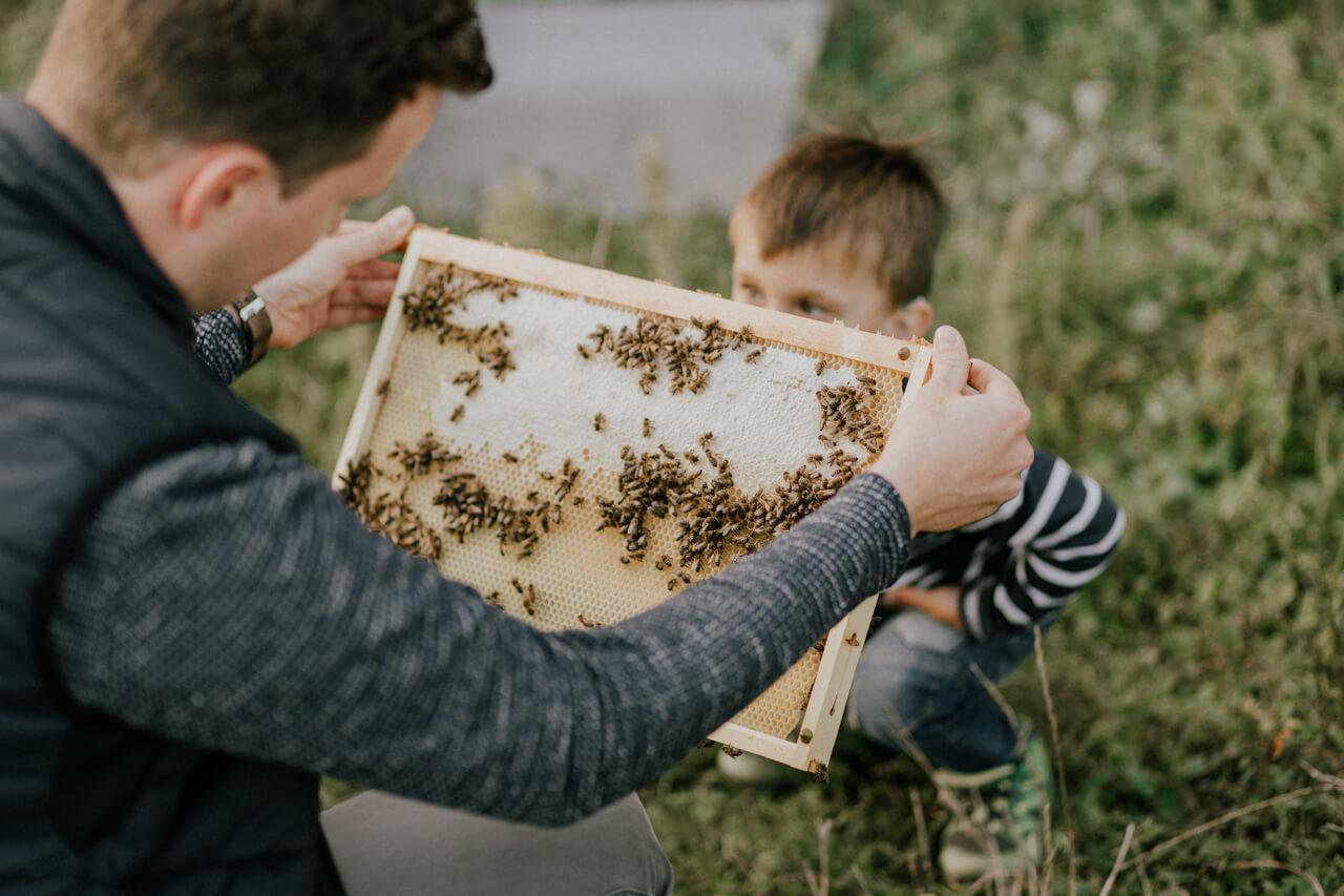 Man hält Bienenrahmen zur Inspektion