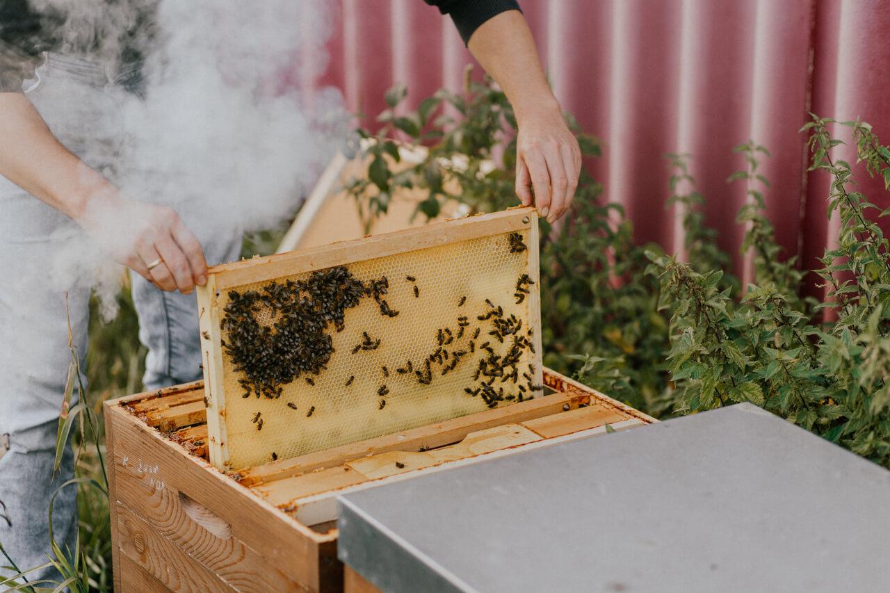 Bienen im Bienen