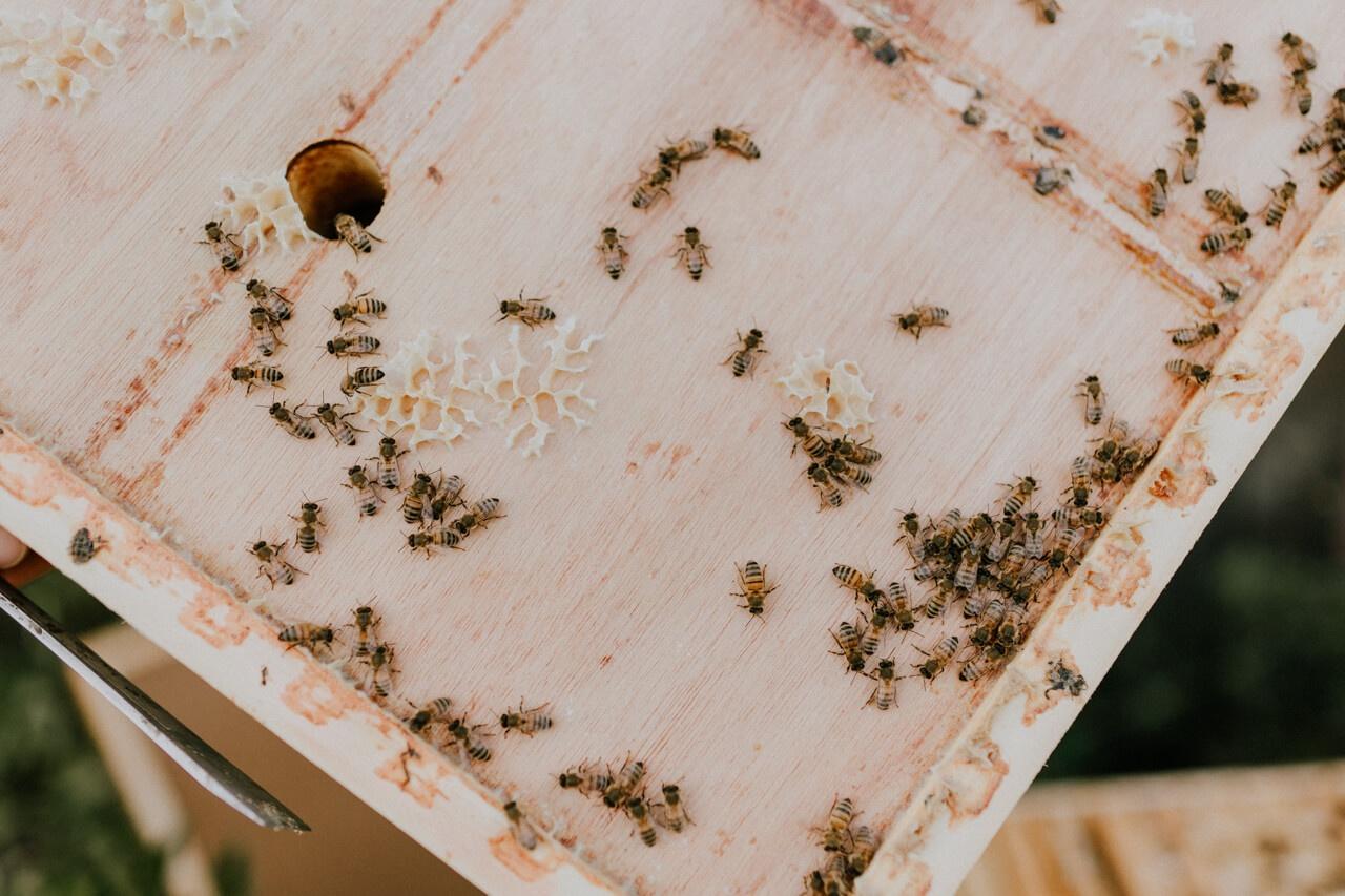 Bienenwachs und Bienen