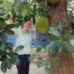 Eine Frau mit Jackfruchtbaum
